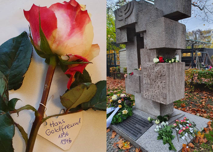 A beautiful rose for Hans Goldfreund laid on November 9 2020 for Kristallnacht, Berlin commemoration